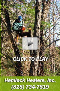 Hemlock Healers provides Tree Pruning/Removal and Forest Insect Disease Treatment in the Western North Carolina and Eastern Tennessee region