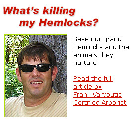 Read Frank Varvoutis' article - What is killing my Hemlocks?